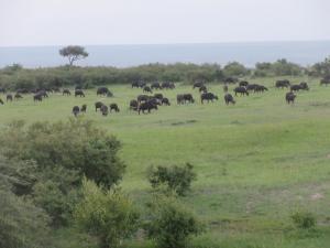 Nairobi - Massai Mara